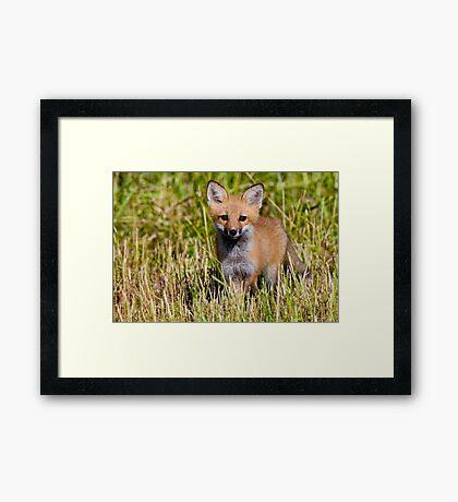 Fox Kit 2 Framed Print