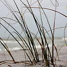 Beach by KerrieLynnPhoto
