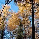 Autumnn Light by Sandra Oddy