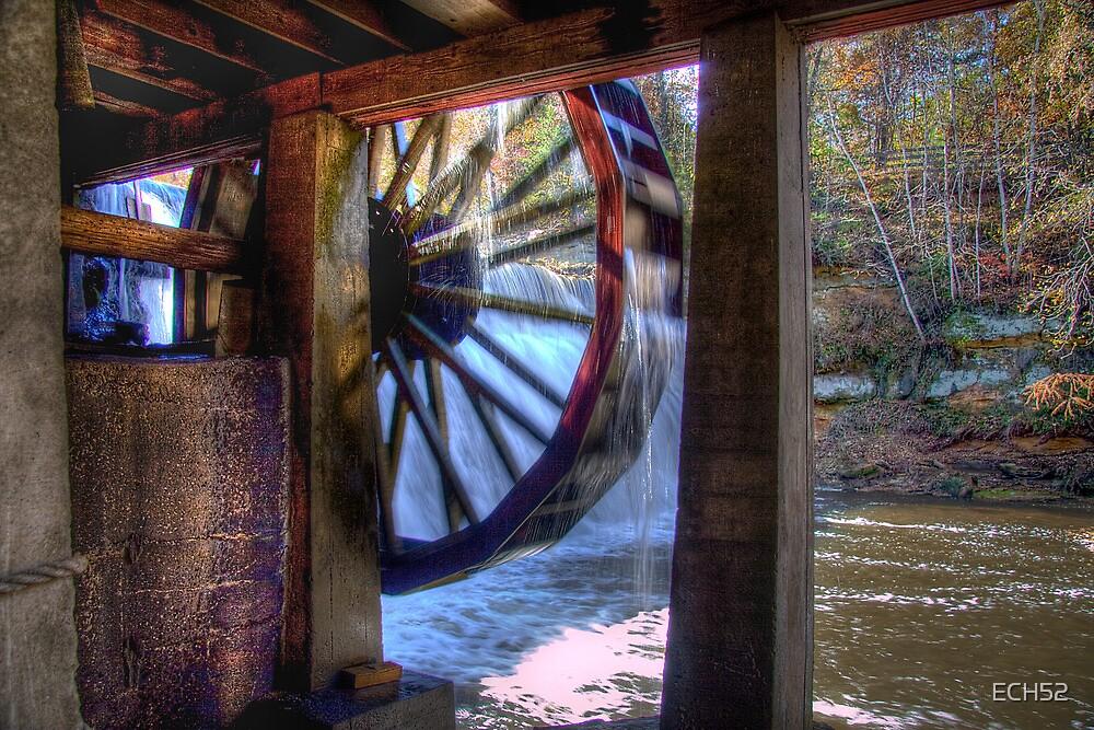 Wheel in Motion by ECH52