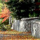 City Walk In Fall by jakking