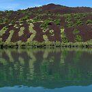 Green on Basalt II by Reef Ecoimages