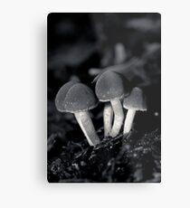 a wee crop of toad stools Metal Print