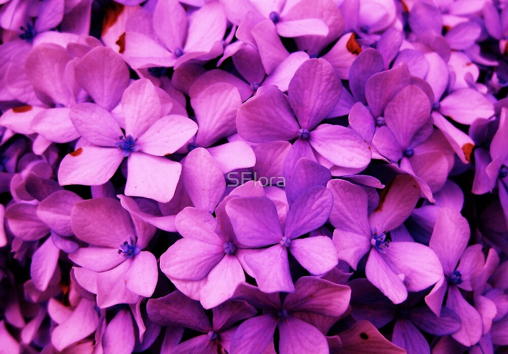 Lilac Wine by Sukhwinder Flora