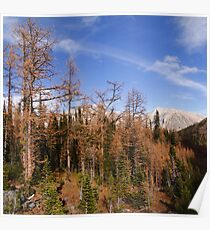 Autumnal woods II Poster