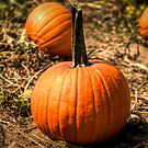 The Great Pumpkin Looks A Little Small... by Eric Scott Birdwhistell