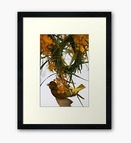 Cape Weaver Framed Print