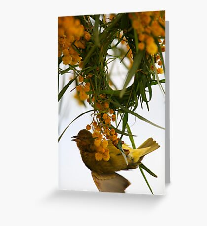 Cape Weaver Greeting Card