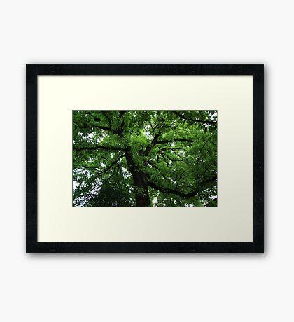 Jardin des Plantes (Paris) Framed Print