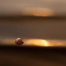 Shellfish by natans