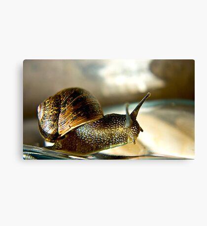 Snail #2 Canvas Print
