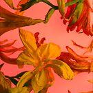 Fresia Pink I by elisabeth tainsh
