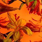Fresia Orange by elisabeth tainsh