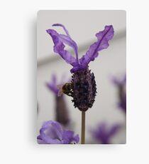 Lavender Luncheon Canvas Print