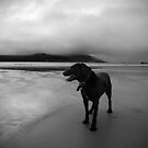 zed the black by Mitch  McFarlane