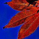 Red Maple Leaf Blue Sky by bryanbellars