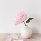 Pastel pink Sarah Bernhardt Peony by Zoe Power