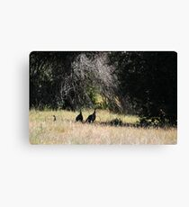 TURKEYS IN THE SHADE Canvas Print