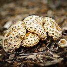 Cute Mushrooms by autumnleaf