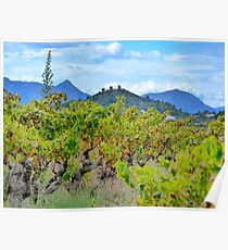 Vineyard with a view Poster