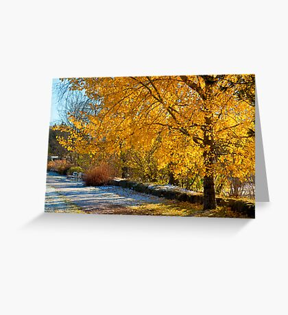Trembling in the autumn sun Greeting Card