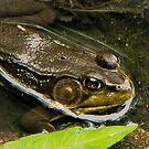 Green Froggy,,,,,MEOW by Adam Kuehl