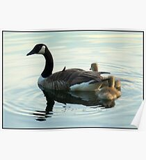 Mother Goose and Goslings Poster