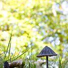 Black parasol  by Sandra O'Connor