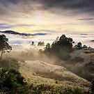 Morning Fog over Glen Huon, Tasmania by Chris Cobern