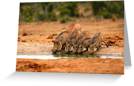 Warthog Family by naturalnomad