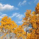 Vibrant Autumn by Christopher Clark
