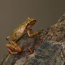 Spring Peeper 2 by naturalnomad