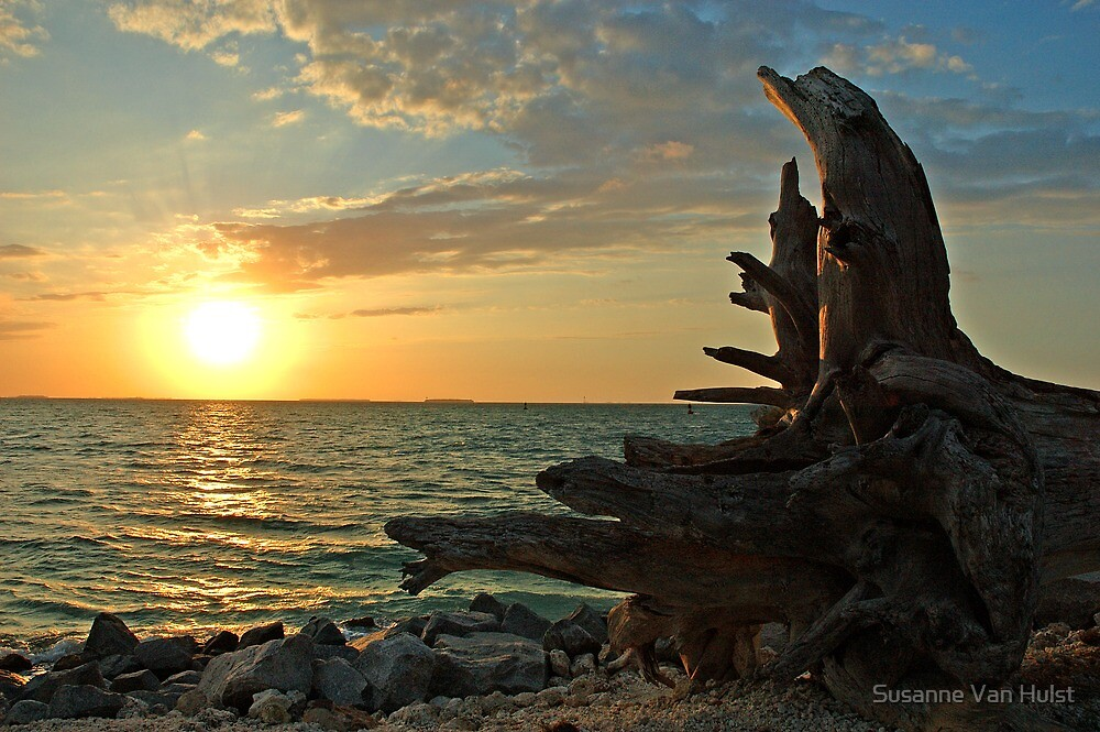Driftwood Sunset in Key West, FL by Susanne Van Hulst