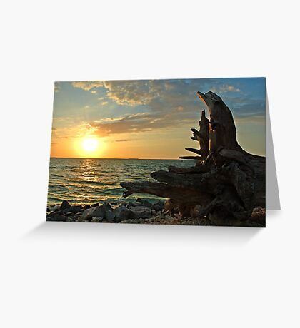 Driftwood Sunset in Key West, FL Greeting Card