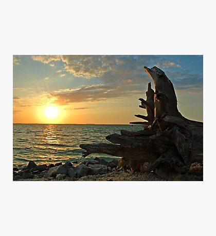 Driftwood Sunset in Key West, FL Photographic Print