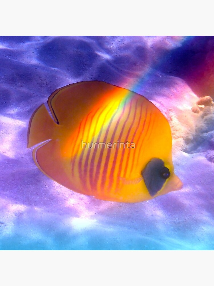 The Bluecheeked Butterflyfish Colorfully by hurmerinta