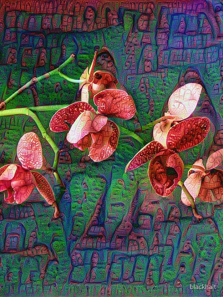 Phalaenopsis A #DeepDream by blackhalt
