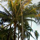 Dancing Palm - Boracay by Wayne Holman