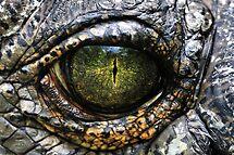 Eye of the Gharial by Dennis Stewart