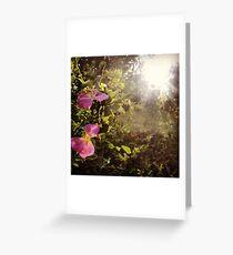 Hidden Pink Wildflowers Found By Sunshine Greeting Card