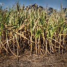 Children Of The Corn by Eric Scott Birdwhistell