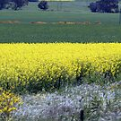 Canola & Country 2010 - 66 by Sharon Robertson