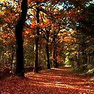 Colors in October by ienemien