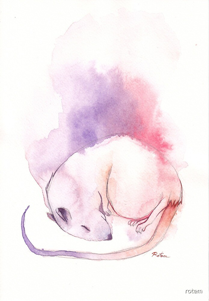 Rat Dream by rotem