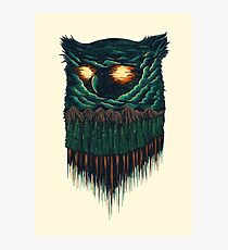 owl forest Photographic Print
