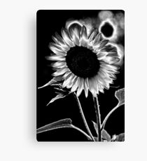 Sunflower solarization Canvas Print