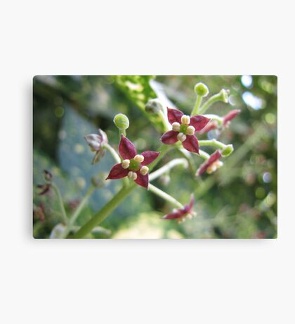 Red Stars of Spring Canvas Print