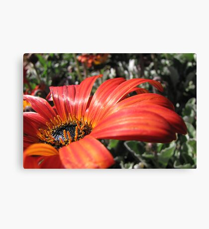 Scarlet petals with droplets of gold Canvas Print