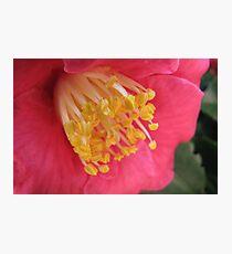 Raw Honey Photographic Print