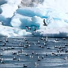 Cold weather is for the BIRDS! by Nancy Richard